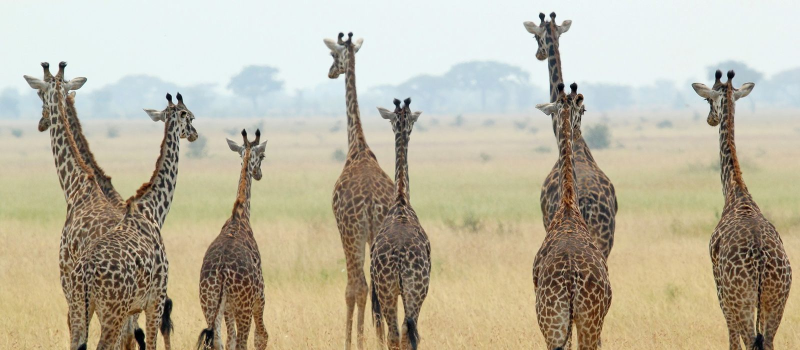 Safari Highlights of Tanzania, Botswana and Zambia Tour Trip 5
