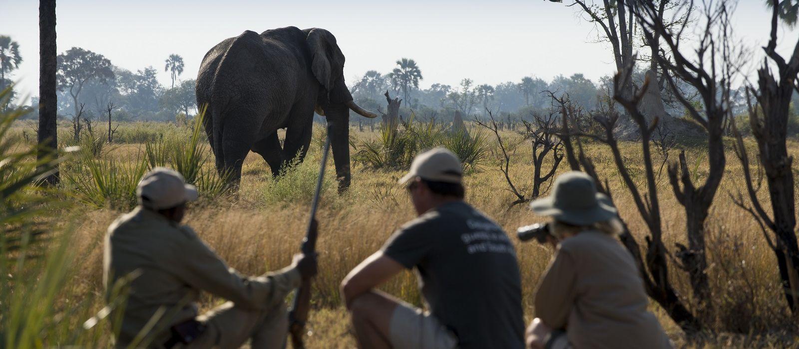 Wings over Botswana Tour Trip 1