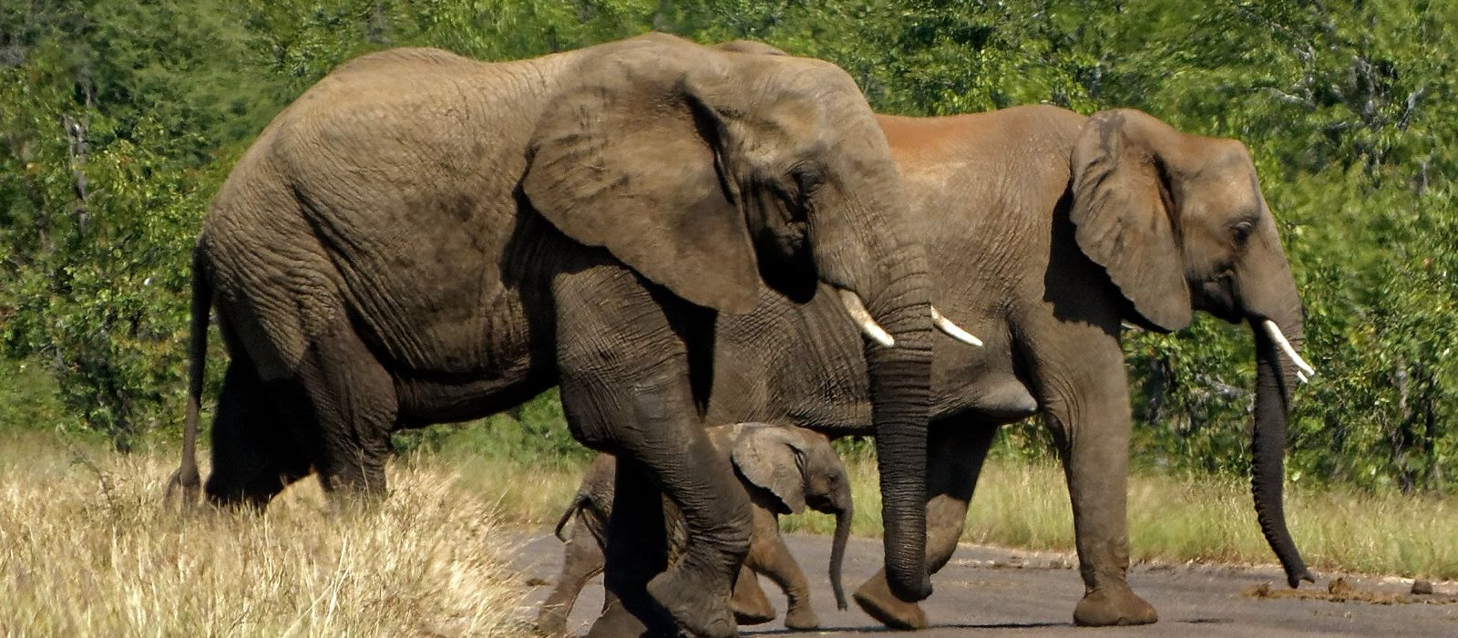South Africa: Western Cape and Kruger Tour Trip 1
