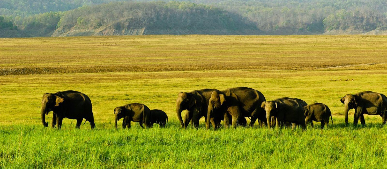 Kerala ganz Klassisch – Malabar Escapes Urlaub 3