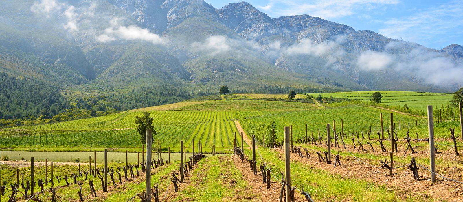 Südafrika Rundreise: Höhepunkte der Kapregion Urlaub 5