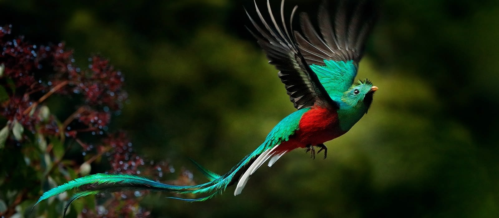 Exotische Vögel & Bezaubernde Landschaften – Vogelbeobachtung in Guatemala Urlaub 5