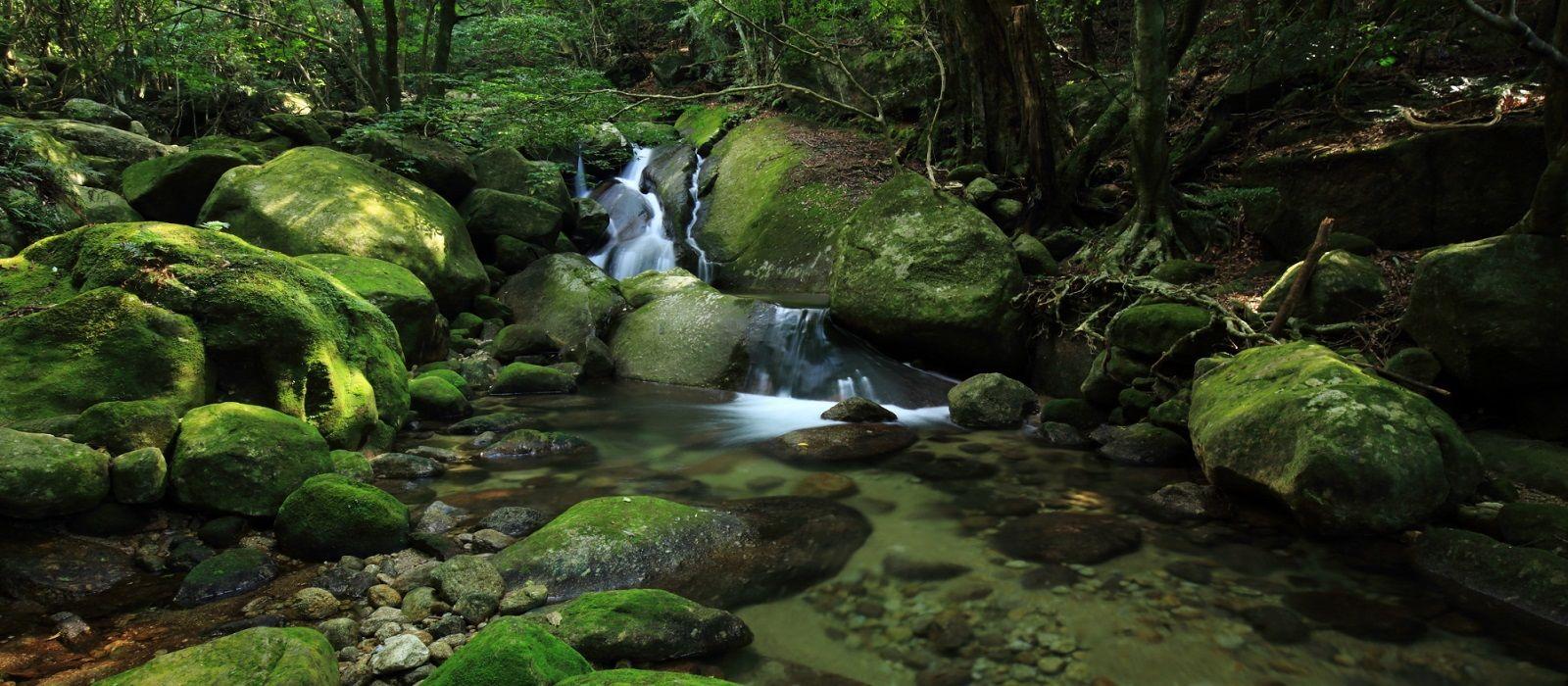 Destination Yakushima Japan