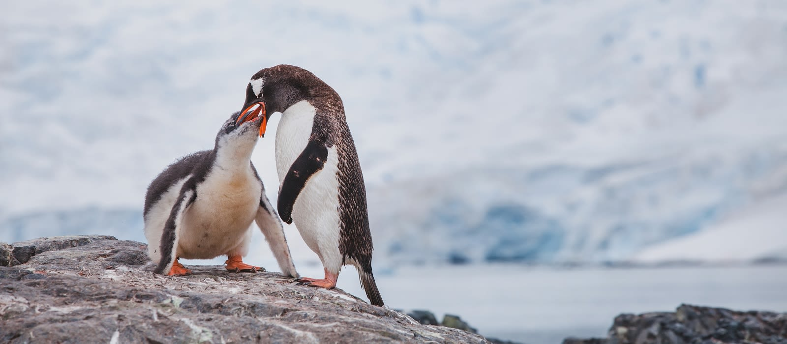 Argentina and Antarctica – Glacial Explorations Tour Trip 3