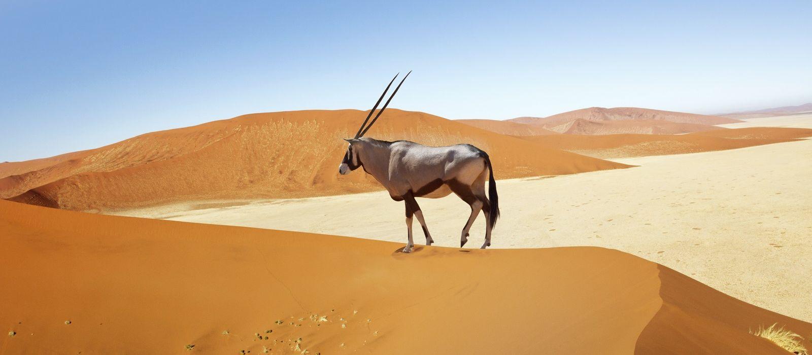 Namibia, Botswana & Simbabwe: Selbstfahrer-Reise via Caprivi Urlaub 7