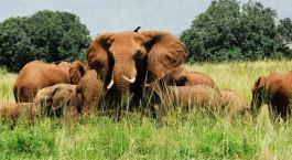 Reiseziel Kidepo Valley Uganda