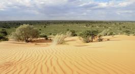 Reiseziel Kalahari Desert Südafrika