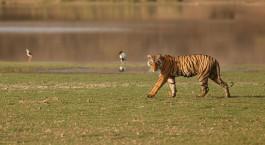 Reiseziel Bandhavgarh Nordindien