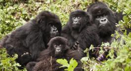 Reiseziel Volcanoes Nationalpark Ruanda