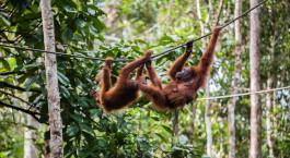 Reiseziel Bukit Lawang Indonesien