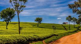 Reiseziel Kericho & Nandi Hills Kenia