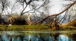 Destination Bharatpur North India