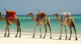 Destination Mombasa Kenya