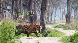 Ranthambore Nord de l'Inde