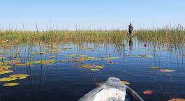Reiseziel Maun Botswana