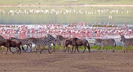 Destination Lake Manyara & Ngorongoro Tanzania