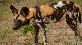 Reiseziel Selous Tansania