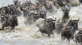 Destination Serengeti (Southern) Tanzania