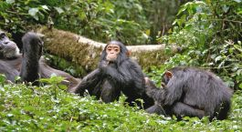 Reiseziel Kibale Uganda