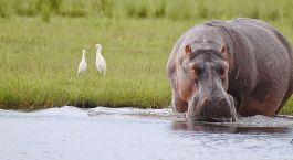 Reiseziel Chobe Nationalpark Botswana