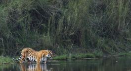 Destination Tadoba Central & West India