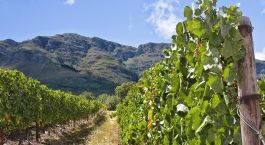 Destination Winelands South Africa