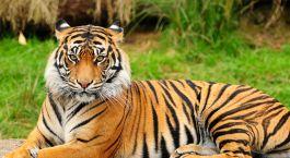 Reiseziel Palanpur Zentral- & Westindien
