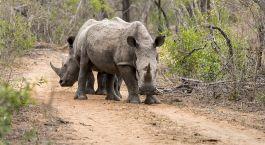Destination Mkhaya Game Reserve Swaziland