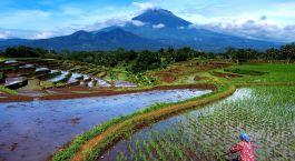 Reiseziel Magelang Indonesien