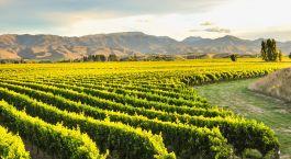 Reiseziel Blenheim Neuseeland