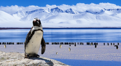Example private tour: Southern Latitudes, Landscapes and Wildlife