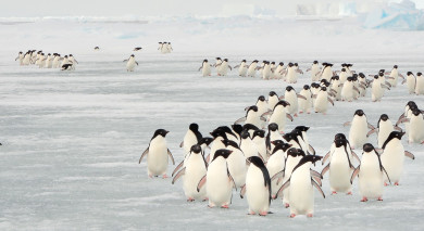 Empfohlene Individualreise, Rundreise: Chile & Antarktis: Sagenhafte Schneelandschaften