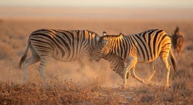 Empfohlene Individualreise, Rundreise: Selbstfahrerreise durch Namibia: Die Höhepunkte des Nordens