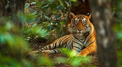 Empfohlene Individualreise, Rundreise: Indien: Tiger Safari und der Taj Mahal