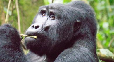Example private tour: Gorilla Trekking and Safari