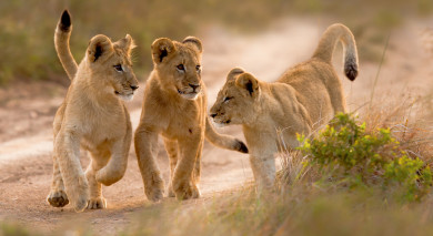 Empfohlene Individualreise, Rundreise: Südafrika Rundreise: Höhepunkte der Kapregion