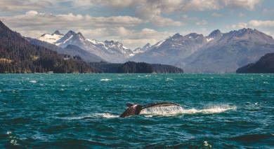 Empfohlene Individualreise, Rundreise: Alaska Roadtrip – legendäre Landschaften und Denali Nationalpark
