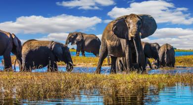 Empfohlene Individualreise, Rundreise: Victoriafälle, Safaris in Botswana und Strand auf Mauritius