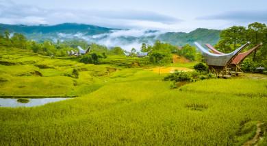 Empfohlene Individualreise, Rundreise: Indonesien – suHöhepunkte von Sulawesi und Sumatra