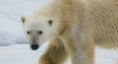 Example private tour: Jewels of the Russian Arctic: Franz Josef Land and Novaya Zemlya