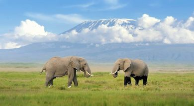 Example private tour: Tanzania: From Kilimanjaro to Zanzibar