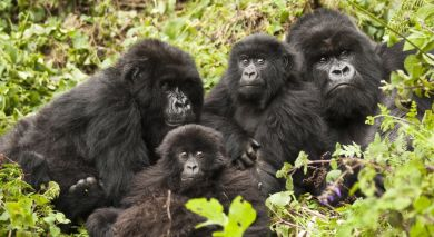 Example private tour: Kenya & Rwanda: Call of the Wild
