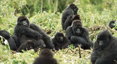 Example private tour: Gorilla Trekking in Rwanda