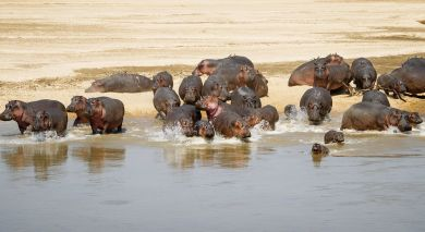 Example private tour: Safari Highlights of Zambia