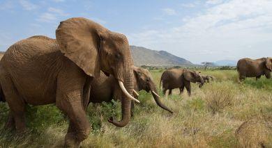 Empfohlene Individualreise, Rundreise: Wildes Kenia – Luxus Safari Reise