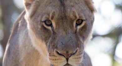Empfohlene Individualreise, Rundreise: Klassische Safari Reise: Simbabwe & Botswana