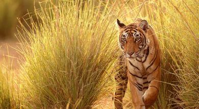 Empfohlene Individualreise, Rundreise: Indien: Kultur, Tiger und Wildlife