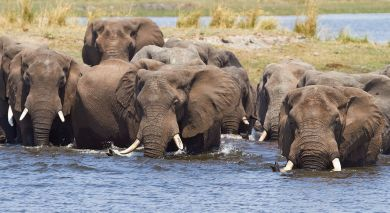 Example private tour: Best of Victoria Falls & Botswana