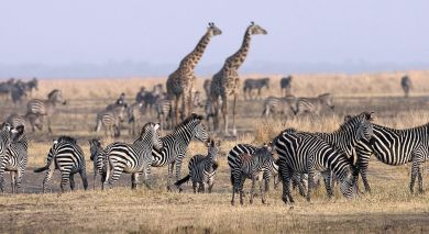 Example private tour: Gorillas, Great Migration and Indian Ocean Dreams