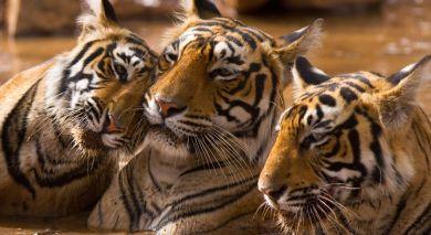 Empfohlene Individualreise, Rundreise: Südindien: Gewürzduft und Artenvielfalt